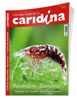 Subscription caridina